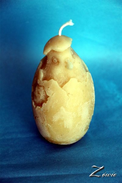 Poussin dans l'œuf